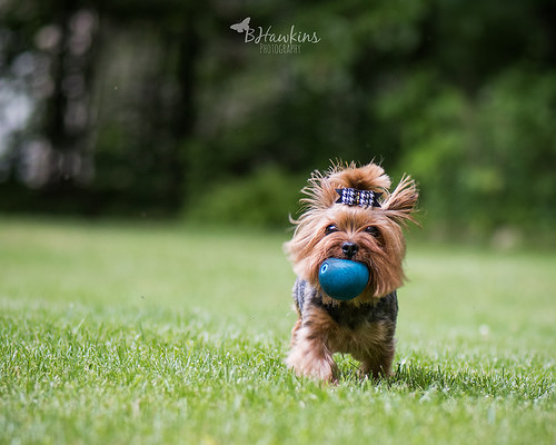 The Simple Joy of a Dog and Their Ball